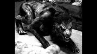 ¿Qué es un hombre lobo? - Licantropia  // Parte 1