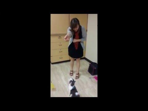 Kitten Tricks! High Jump