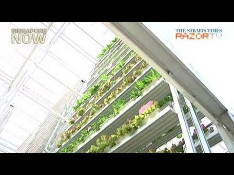 Singapore's first vertical farm