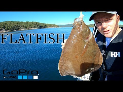 Boat Fishing For FLATFISH With Rig And Bait
