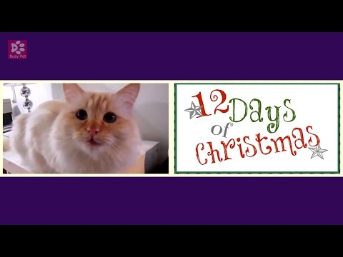 cats meowing the 12 days of christmas short excerpt christmas song