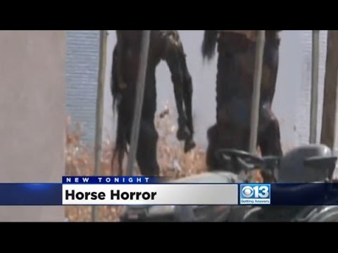 Horse Horror in Antelope California