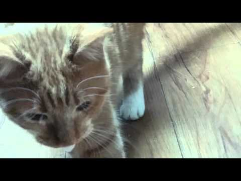 Kitten Foaming At The Mouth