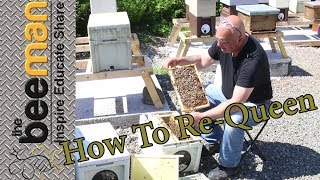 How to Re-Queen an aggressive hive or split