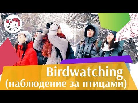 Проект Birdwatching Moscow