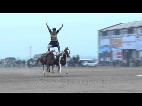 Dual horse riding while standing - spectacular!