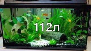 аквариум 112л, месяц после запуска