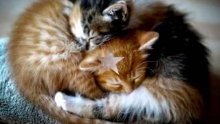 Про КОТЯТ Невероятно. Самые милые КОТЯТА .ч.1  #котята
