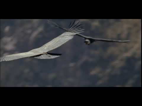 Nigel Marven in Colca Canyon with Andean Condor