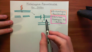 Homologous Recombination for Double Strand Breaks Part 1