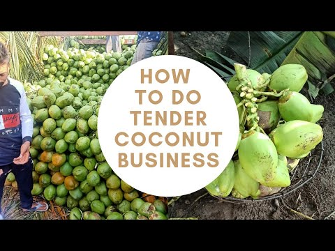 Tender Coconut Business [Water coconut][Tender coconut]