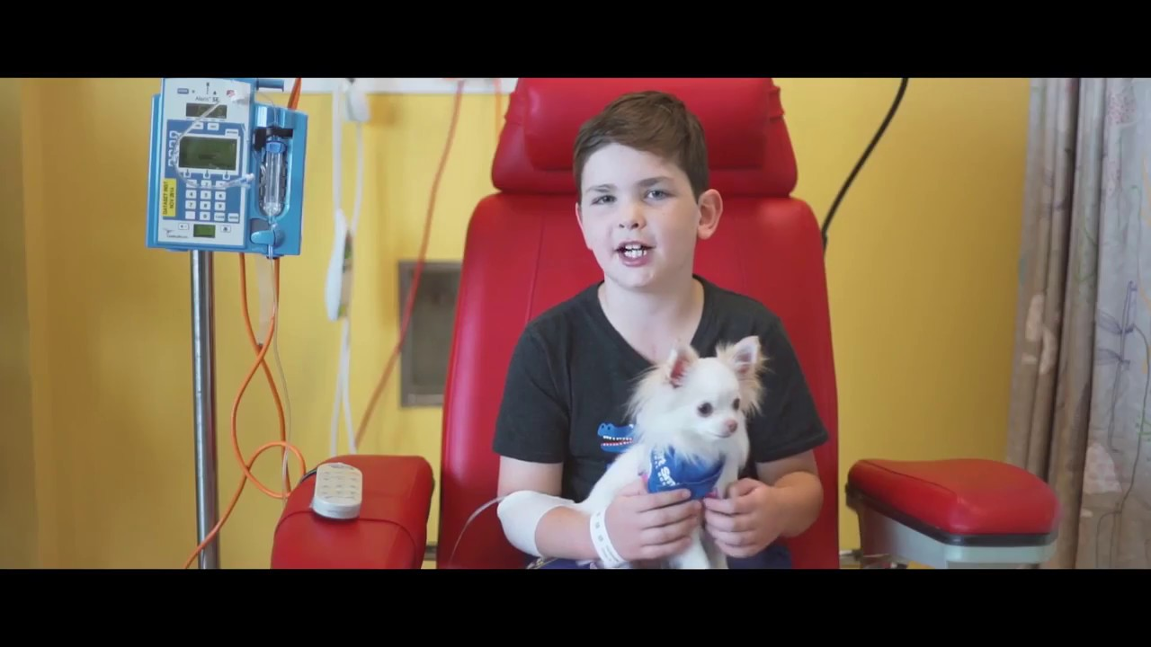 Lort Smith Pet Therapy Program Youtube