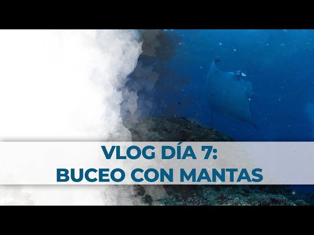 2 Little Divers Bali Vlog Día 7: Buceo con Mantas