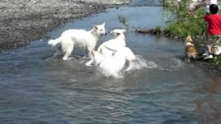 レウスくんのホームグラウンドの揖斐川で遊びました!