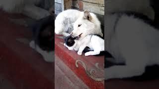 Собака хочет съесть кошку