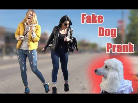 FAKE DOG SCARE PRANK | AWESOME REACTIONS