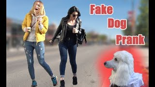 FAKE DOG SCARE PRANK | AWESOME REACTIONS