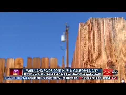 Cal City Police continue marijuana crackdown