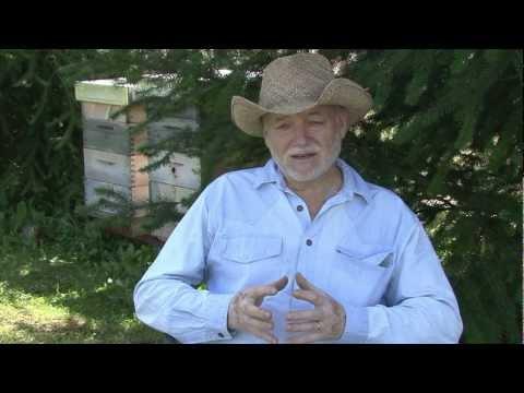 Petr Texl - VSH (Varroa Sensitive Hygiene)