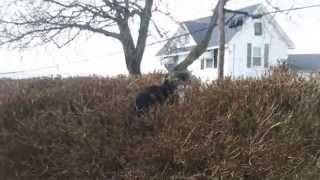 Kitty ON the Bushes