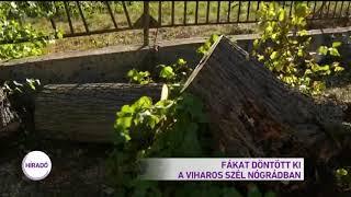 Fákat döntött ki a viharos szél Nógrádban