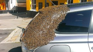 Swarm of Bees Follows Woman's Car For Days