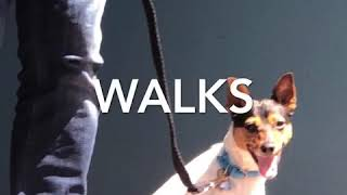 Stop dog pulling on leash.