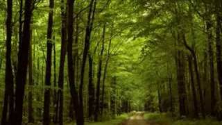 Paul Davies - Free World (Original Mix)