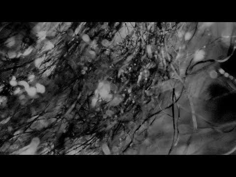 THE BACK HORN「コワレモノ」MUSIC VIDEO