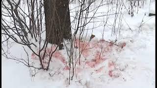 В Нижнекамске простились с убитой на лыжне Гульшат Котенковой