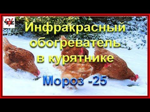 Инфракрасный обогреватель в курятнике.  Мороз -25