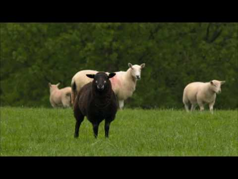 Organic Farming.  BBC Countryfile