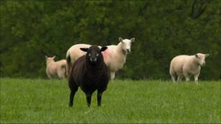 Organic Farming  BBC Countryfile