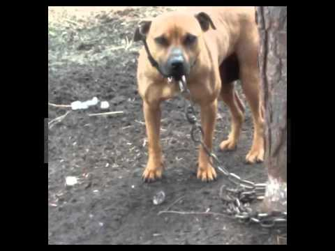 BROWN''S KENNELS # Buffalo Soldiers