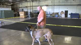 Canine Assisted Therapy At Fort Knox | Kentucky Life | Ket