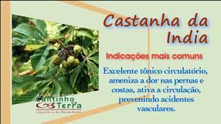 Hippocastanumis aesculus crema de