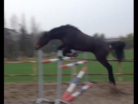 Free Jumping Calinka D'amas Z 140CM | Charlotte Van Nifterick