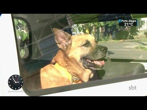 Vídeo mostra cães sendo deixados na rua por veículo da prefeitura | SBT Notícias (27/02/18)