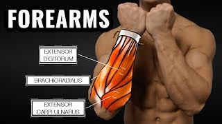 The Best Science-Based Forearm Workout for Size and Strength thumbnail