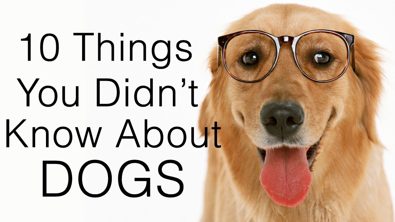 10 Things I Know About You: 10 Things You Didn't Know About Dogs