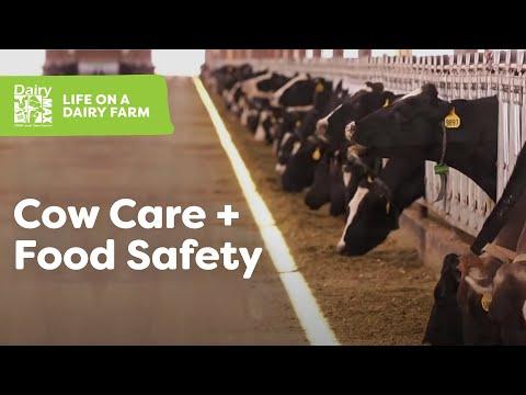 How Milk Gets from Farm to Fridge