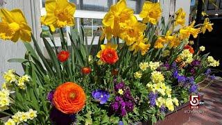Savoring the calm of springtime on Nantucket