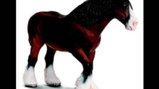 André van Duin - Er Staat Een Paard In De Gang