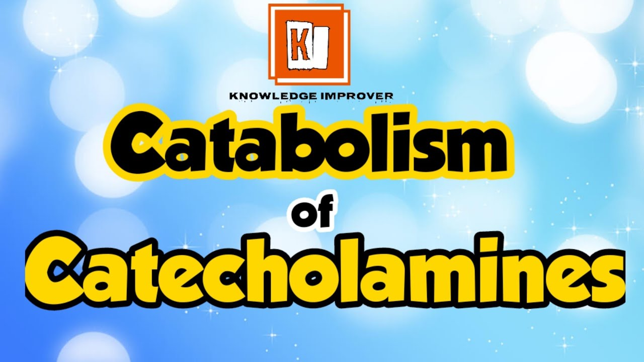 Catabolism of Catecholamines | Medicinal Chemistry