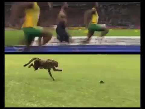 The Fastest Act 2 – Usain Bolt vs. Cheetah