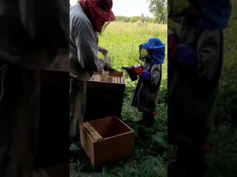Анюта юный пчеловод