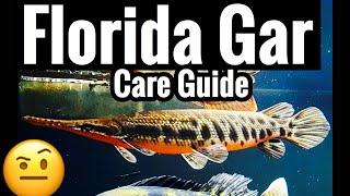 """Florida Gar Aquarium Care """"Spotted"""" Fish Guide"""