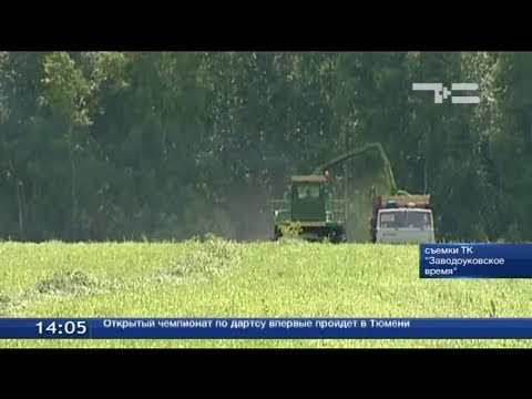 Заводоуковские животноводы приступили к заготовке кормов