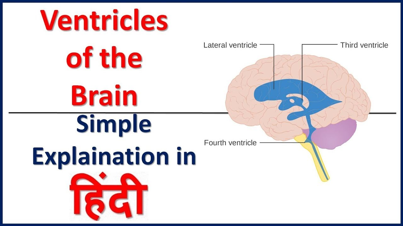 Brain Ventricles Ventricular System Of The Brain In Hindi