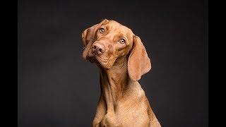 Psy rozpoznają złych ludzi! Najnowsze badania to potwierdzają